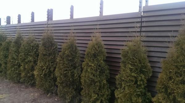 Забор из дерева, дубовая доска